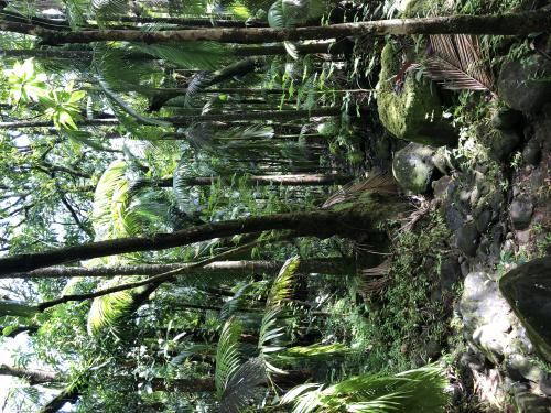 Straße zum Botanic Garden