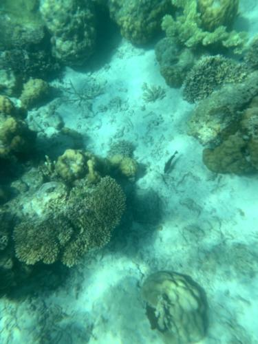 El Nido Paradise Tour Underwater